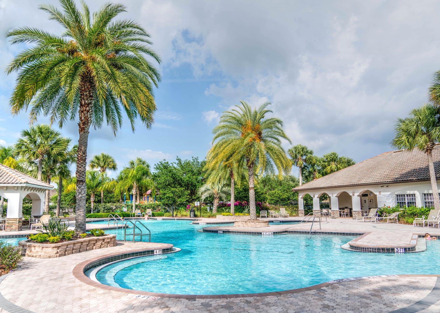 palm trees paradise pool poolside