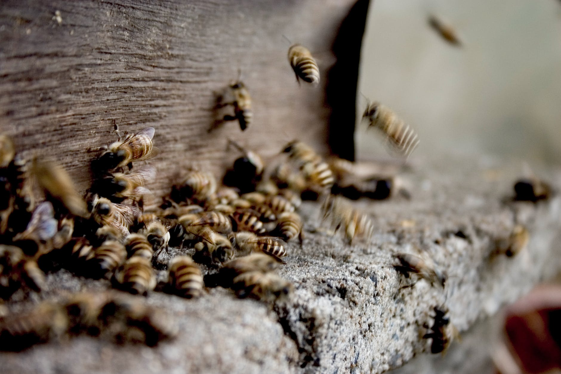 swarm of bees making honey in hive